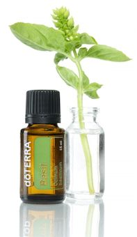 Bottle of Basil oil with beaker and sprig of basil