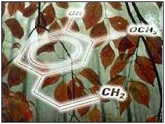 Eugenol molecule with leaves